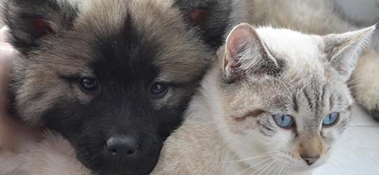 Royal Canin, brandul care îţi oferă nutriţia potrivită pentru animalul tău de companie
